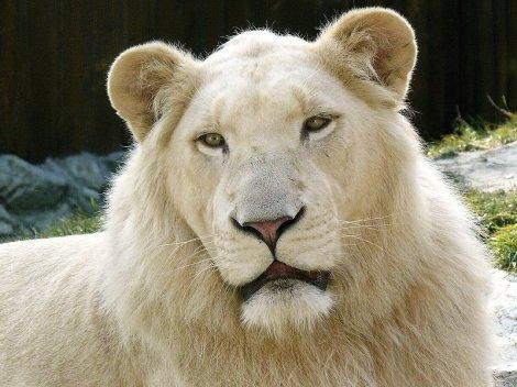 10 самых опасных животных планеты