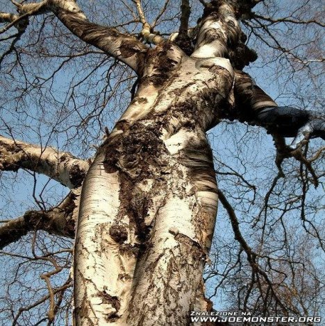Самые интересные деревья (11 фото)