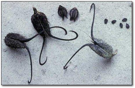 Самые жуткие растения на планете (11 фото)