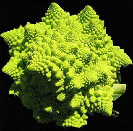 Самые экзотические овощи в мире (14 фото)
