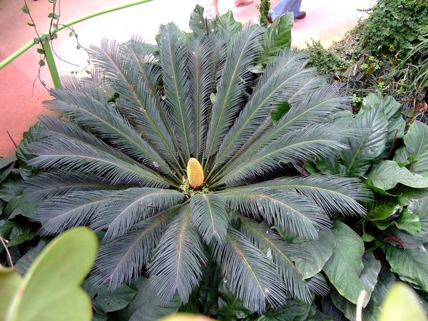 Экзотические растения почтой по