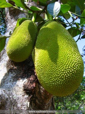 Топ-10 съедобных экзотических растений (8 фото)