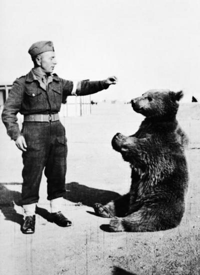 Животные на войне (6 фото)