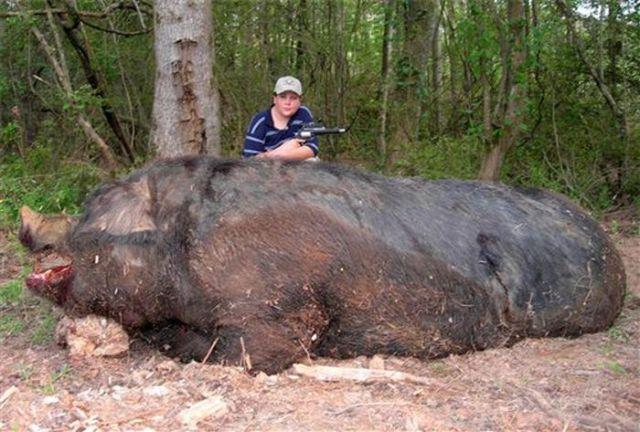 Животные огромных размеров (42 фото)