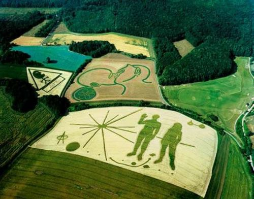 Невероятные картины на полях (12 фото)