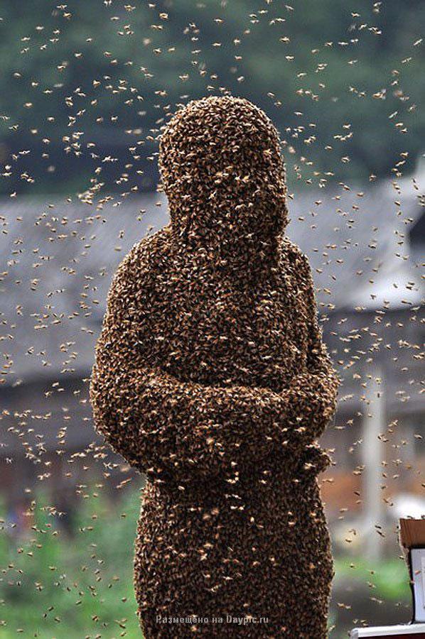 Усмиритель пчел Ванг Далин