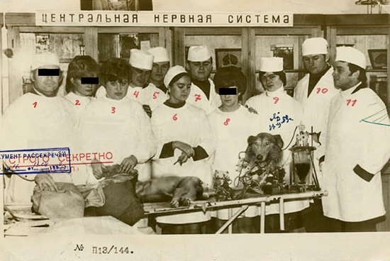 """Проект """"Колли"""": как в СССР оживляли животных"""