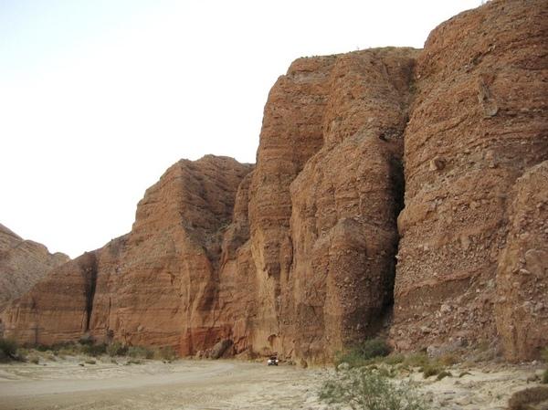 Цветущая пустыня yа границе США и Мексики (17 фото)