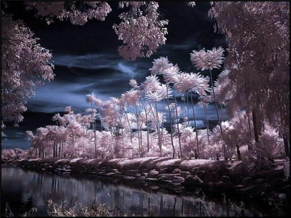 Инфракрасная фотография (12 фото)