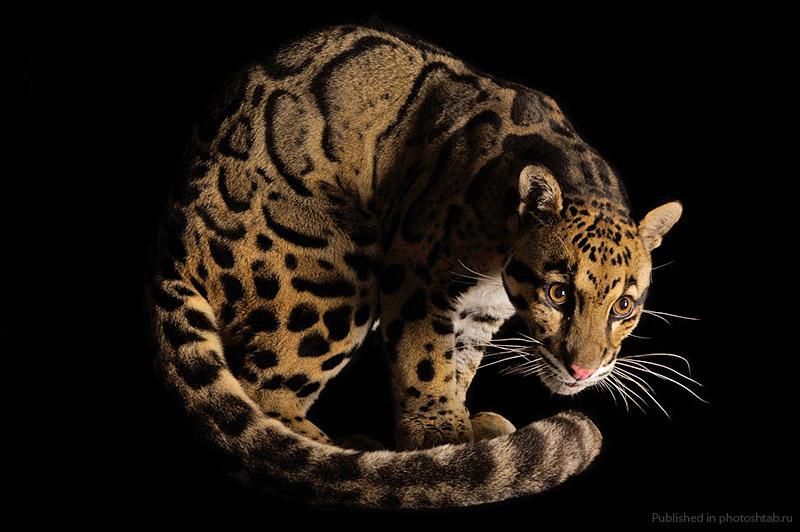 http://billionnews.ru/uploads/posts/2012-02/1329065333_14.jpg