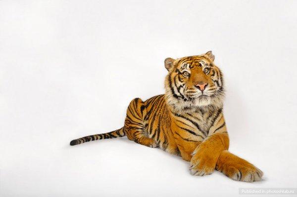 Портреты уникальных животных Джоэла Сартори (Joel Sartore) (24 фото)