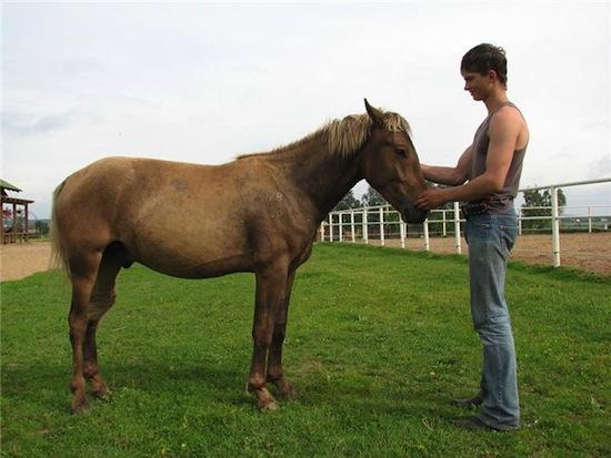 5 удивительных пород животных, выведенных человеком (9 фото)
