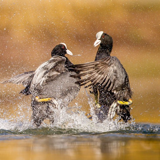 Победители конкурса The British Wildlife Photography Awards 2012 (29 фото)