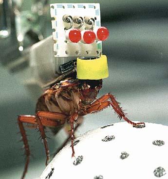 Тараканы-киборги (3 фото + видео)