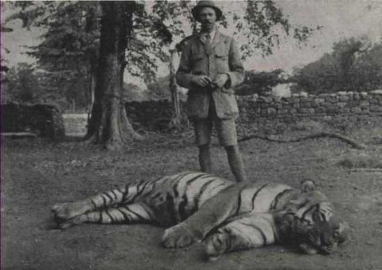 Самый известный тигр в мире — Чампаватская тигрица, убившая 436 человек