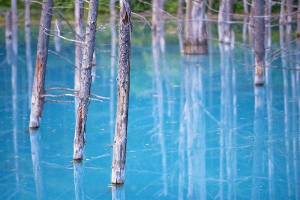 Хоккайдо голубой пруд в Японии (6 фото)
