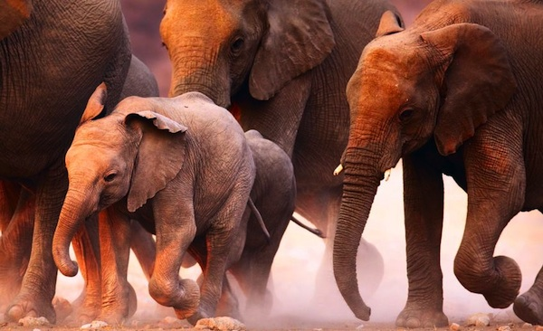 Стадо пьяных слонов снесло индийскую деревушку (2 фото)