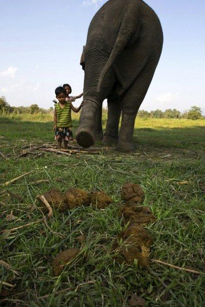 Самый дорогой кофе в мире делают из экскрементов слона (4 фото)