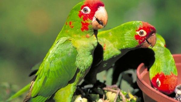 10 Видов животных, которых можно встретить в неожиданных местах (10 фото)