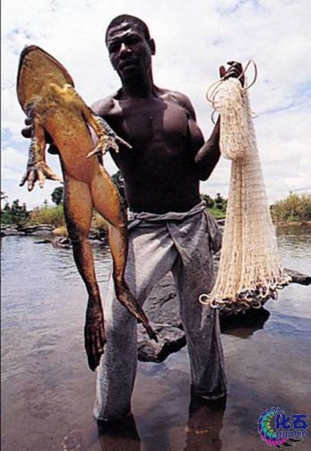 11 самых необычных рыб в мире (11 фото)