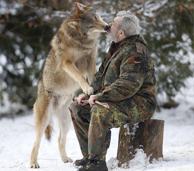 Парк волков Вернера Фройнда (15 фото)