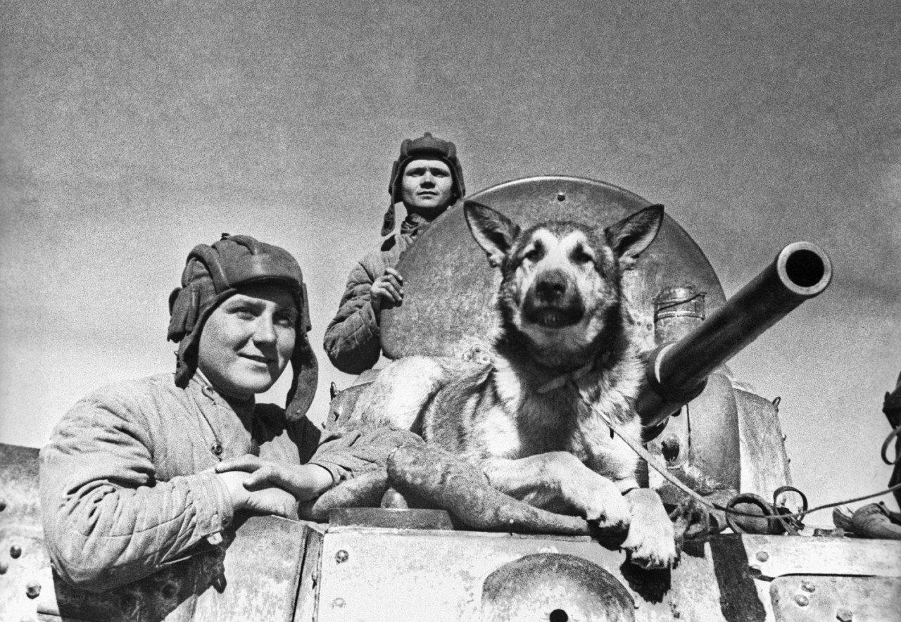 Интересные факты о Великой Отечественной войне. Джульбарс - собака ...
