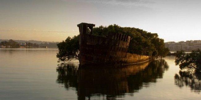 Сиднейский лес, который плавает