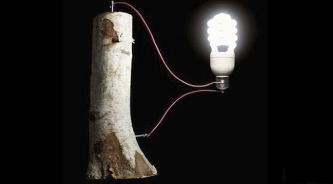 Батарейки из дерева