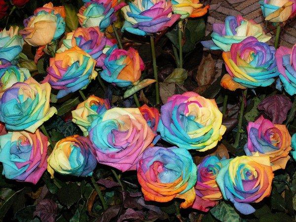 Самые дорогие цветы планеты (6 фото)
