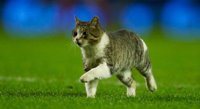 Несколько фактов о кошках