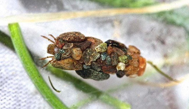 Удивительные жилища личинки ручейника(13 фото)
