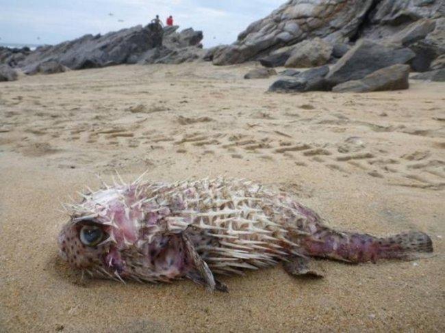 Нудистский пляж рекорды гиннеса