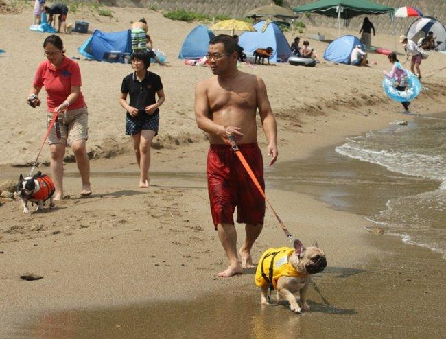 В Японии открыт пляж для собак (14 фото)