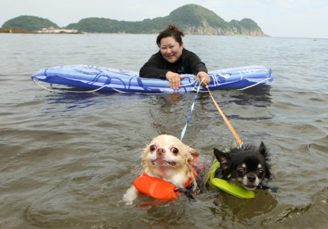 В Японии открыт пляж для собак:D