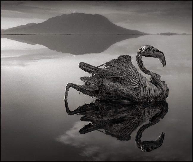 Озеро-вбивця в Танзанії