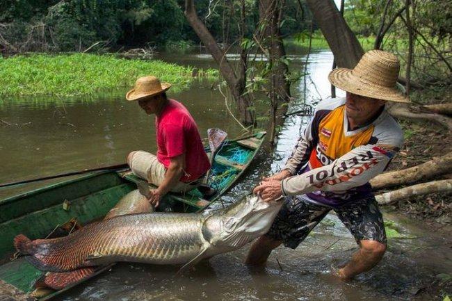 ловят рыбу амазонки видео