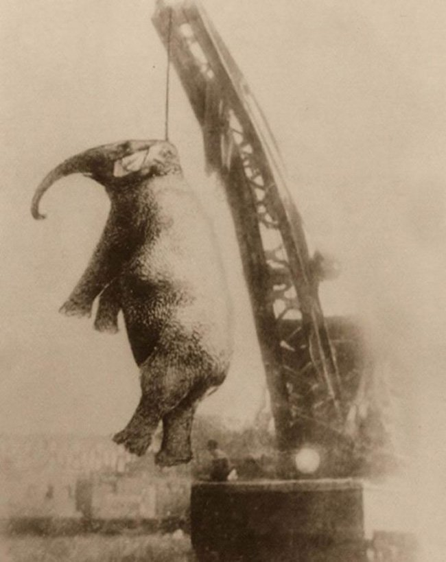 Жестокая история про слониху Мэри (3 фото)