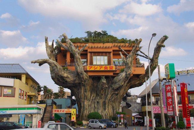 Уникальный ресторан на дереве (3 фото)