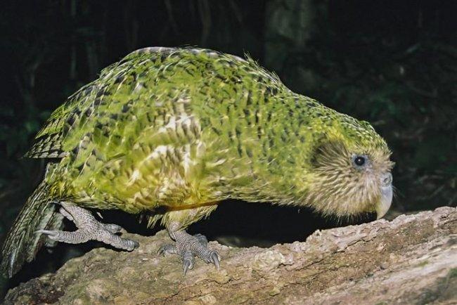 Ремонт яйца редкого попугая (8 фото)