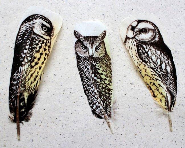 Искусство рисования на птичьих перьях (10 фото)