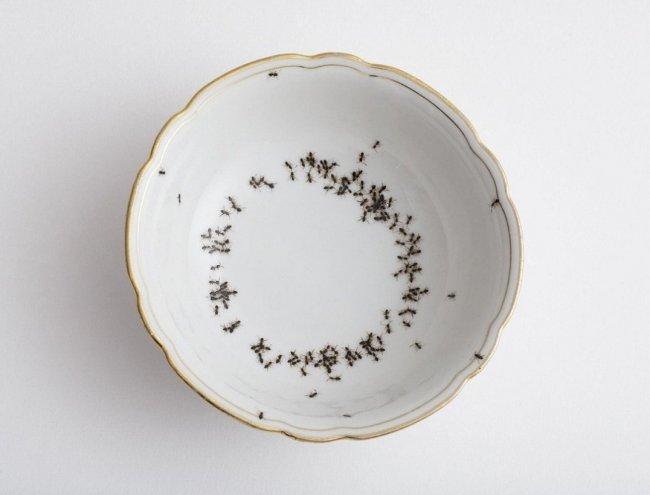 Роспись на фарфоре в виде муравьев (14 фото)