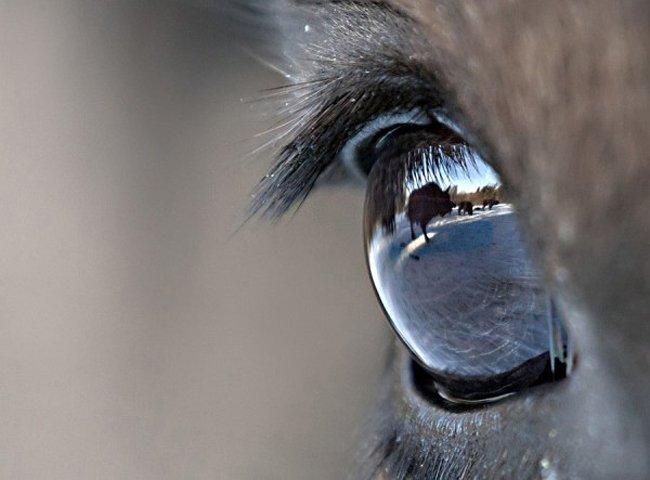 """25 лучших работ с фотоконкурса """"Золотая черепаха"""" (25 фото)"""