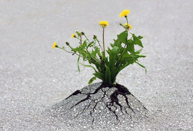 Безграничная сила природы