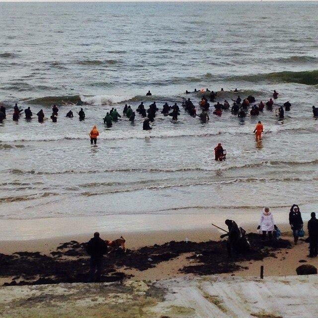 Янтарь на берегу Балтийского моря (4 фото)