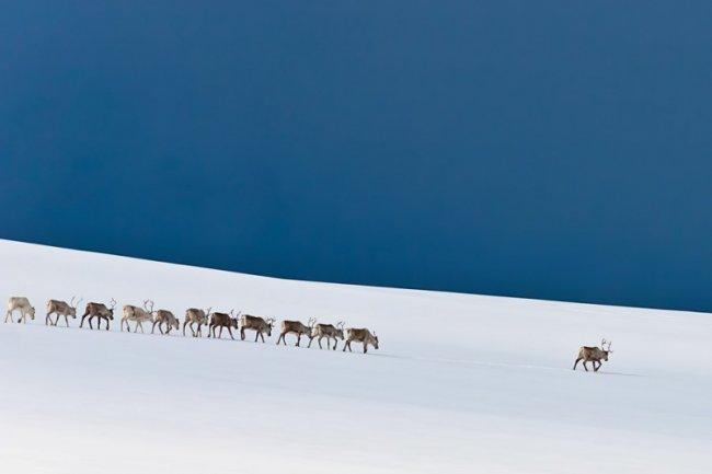 Самые невероятные фотографии природы 2014 года (11 фото)