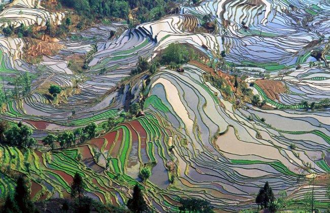 Рисовые поля в Китае (фото дня)