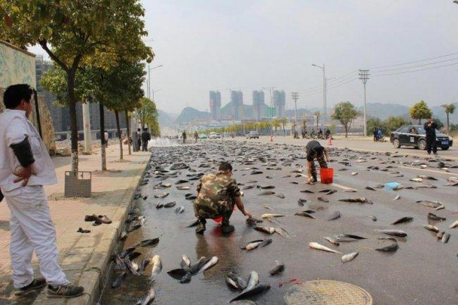 7 тонн рыбы на дороге в Китае (8 фото)