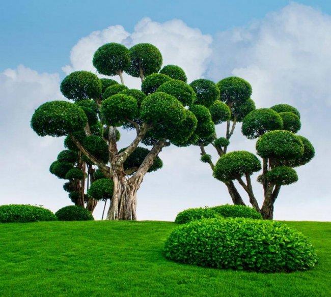 Японский сад во Вьетнаме (14 фото)