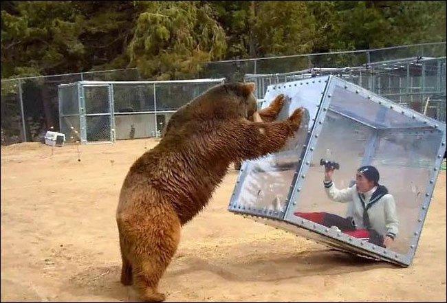 Когда захотел поближе познакомиться с медведем (1 фото + 1 видео)