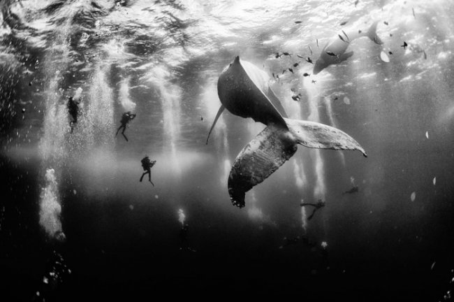 ������ ������ ������������ National Geographic Photo Contest 2015 (26 ����)